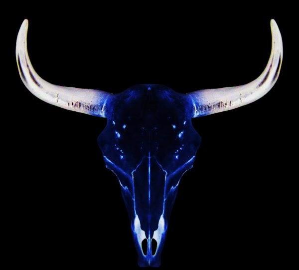 cosmic-bull1